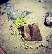 Fav Agate Beach 2