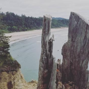 Surfers through the stump